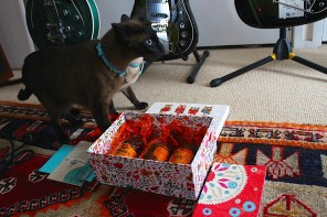 Gift Styling for a 1960's Cat